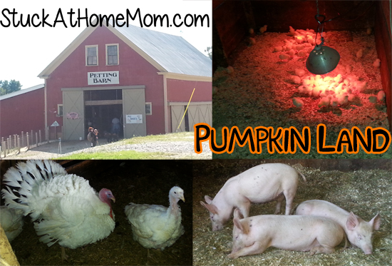 Pumpkin Land Petting Barn