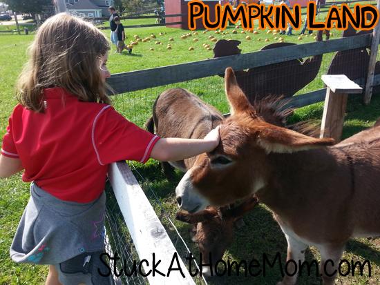 Pumpkin Land Petting Zoo