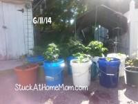 Bucket Garden Container