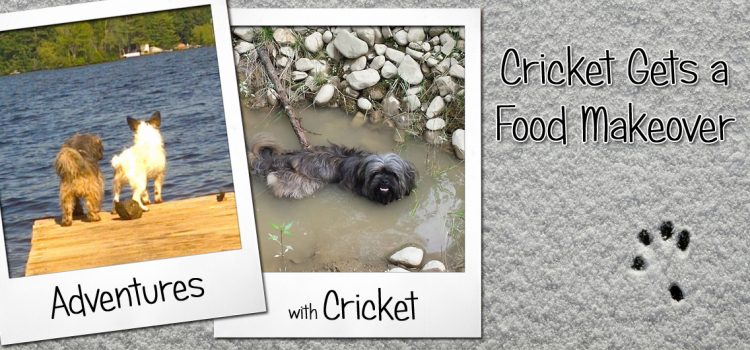 Cricket Gets a Food Makeover @Iams #IamsDifference #ad