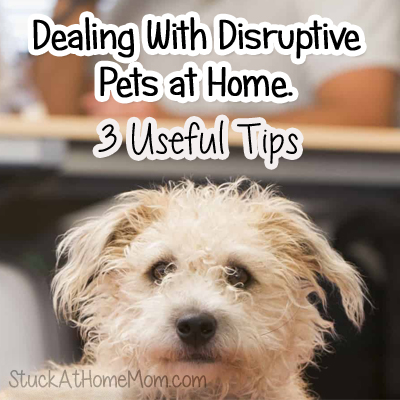 Dealing With Disruptive Pets at Home 3 Useful Tips