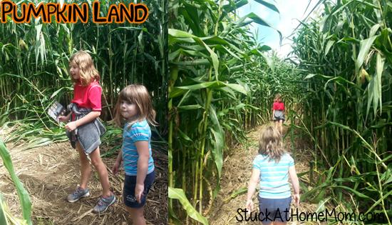 Pumpkin Land Corn Maze