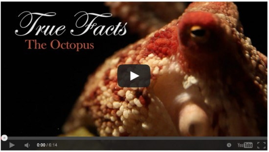 Hilarious Octopus Documentary