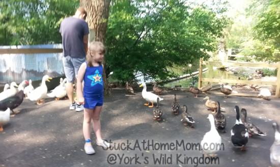 York's Wild Kingdom #YorksWildKingdom
