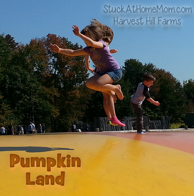 Pumpkin Land at Harvest Hill Farms, Mechanics Falls, Maine #PumpkinLand