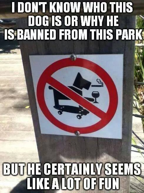 dogs just want to have fun