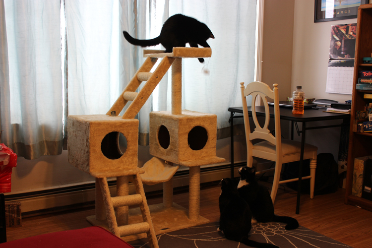 cats playing2