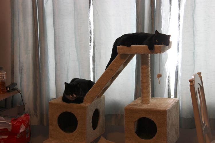 sleeping cats2