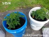 Bucket Garden Container Gardening 1