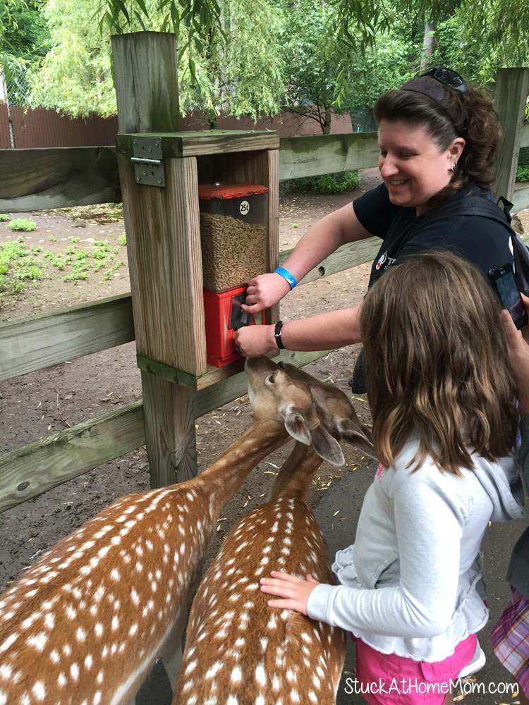 York's Wild Kingdom #Zoo #AmusementPark