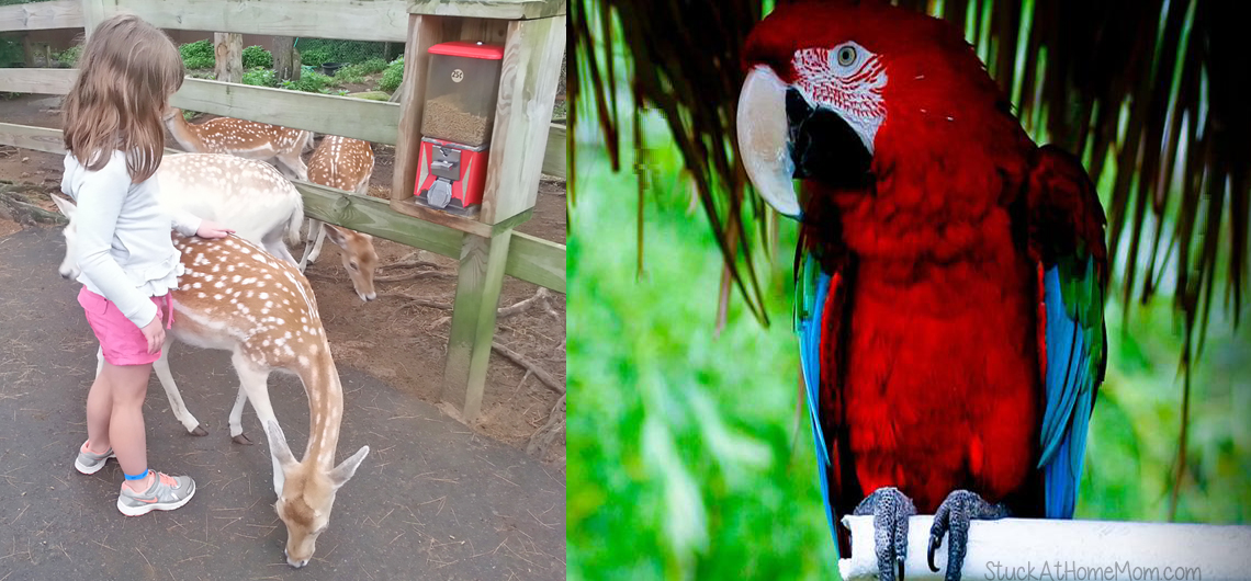 Deer and Ducks and Goats – Oh My! York's Wild Kingdom #Zoo #AmusementPark