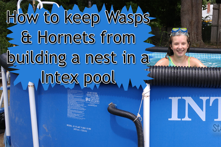 How to keep Wasps and Hornets from building a nest in a Intex pool