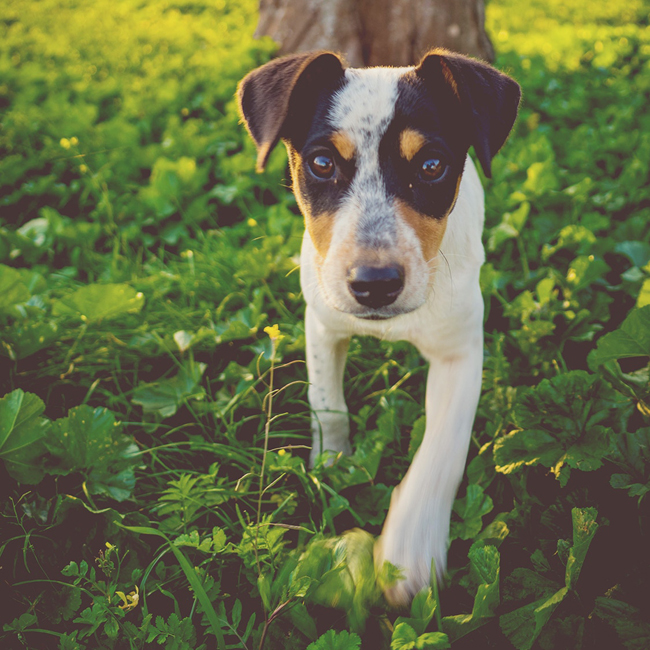 How to Protect Your Dog in the Summer