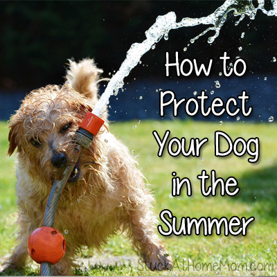 Useful Tips on How to Protect Your Dog in the Summer #Dog