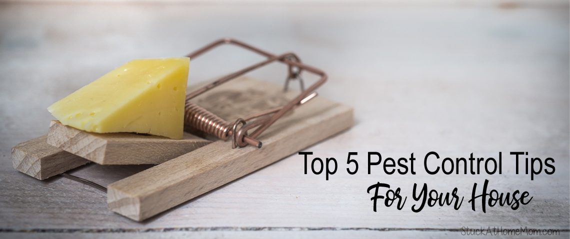 Top 5 Pest Control Tips For Your House