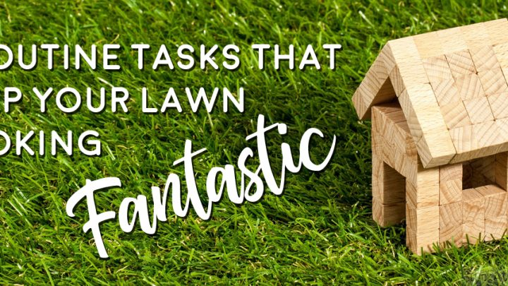 5 Routine Tasks That Keep Your Lawn Looking Fantastic