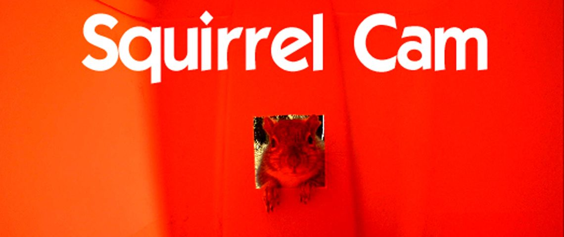 Squirrel Cam the Musical! It's a Squirrel Cam Christmas.
