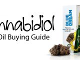 Cannabidiol CBD Oil Buying Guide