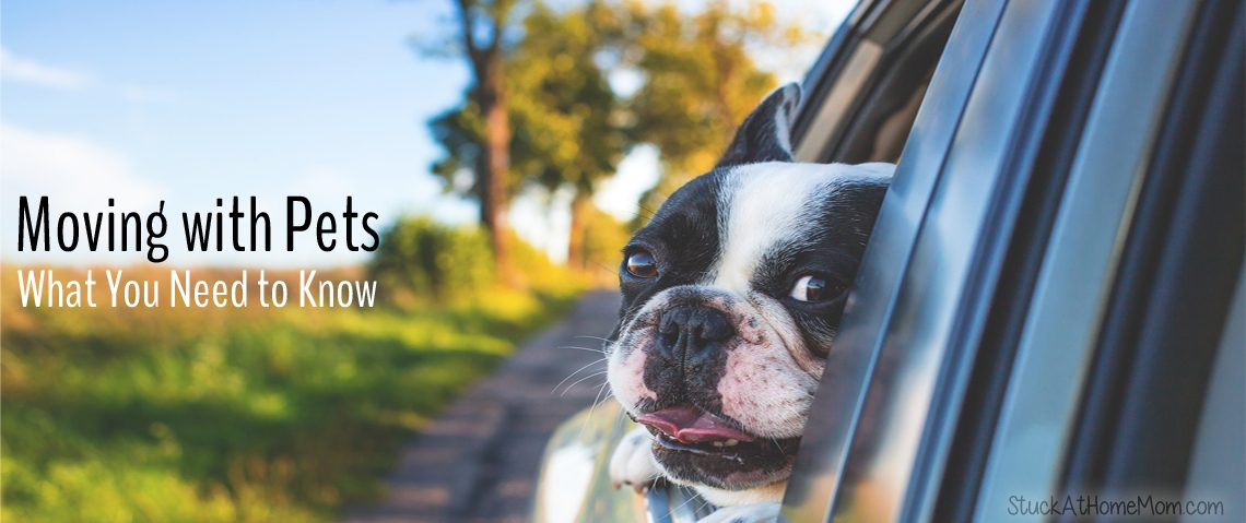 Moving with Pets: What You Need to Know