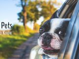 Moving with Pets What You Need to Know