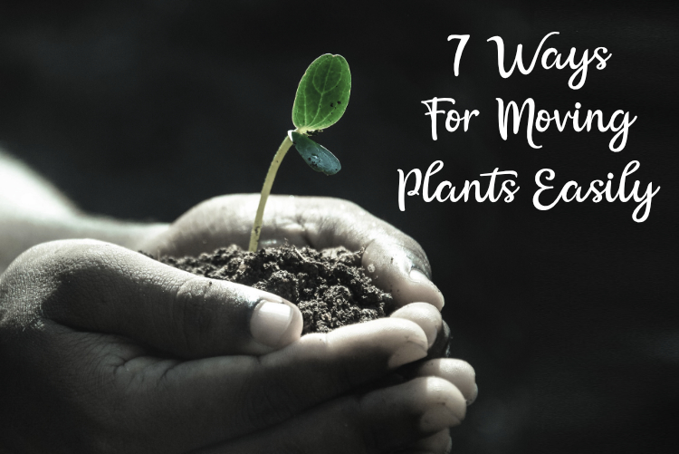 7 Ways For Moving Plants Easily