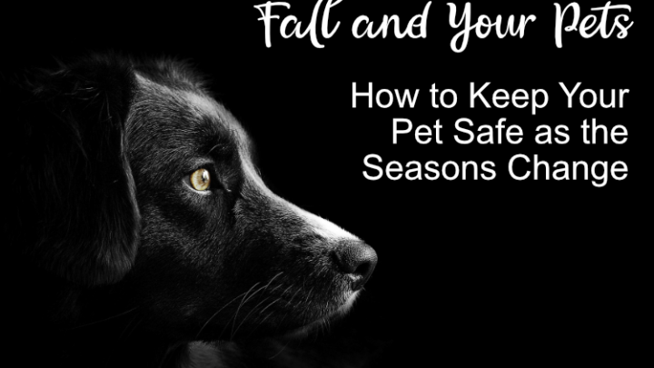 Fall and Your Pets: How to Keep Your Pet Safe as the Seasons Change
