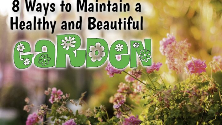 8 Ways to Maintain a Healthy and Beautiful Garden