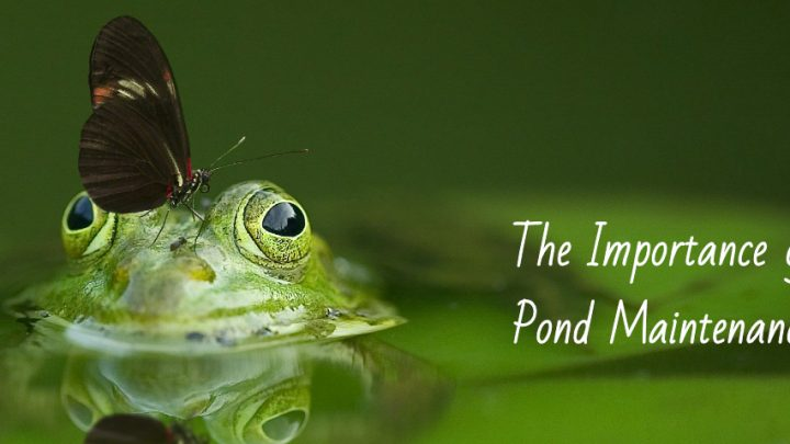The Importance of Pond Maintenance