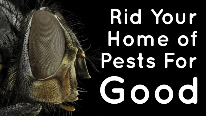Rid Your Home of Pests For Good