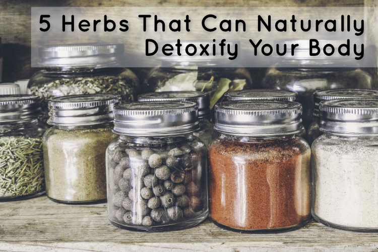 5 Herbs That Can Naturally Detoxify Your Body