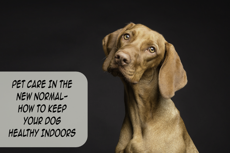 Pet Care In The New Normal- How To Keep Your Dog Healthy Indoors