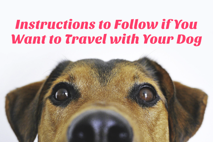Instructions to Follow if You Want to Travel with Your Dog